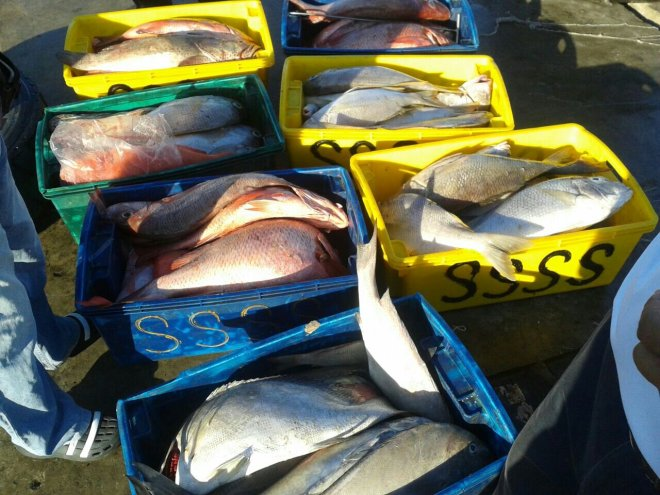 Kudat fish catch 2